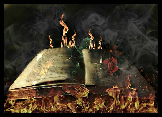 book rose fire digitalartclub