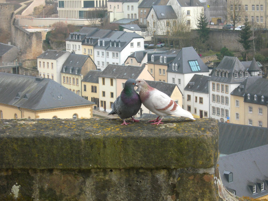 love of piegeons spring luxembourg city