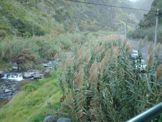 2008 portugal madeira saojorge calhau old path shore river canes view green