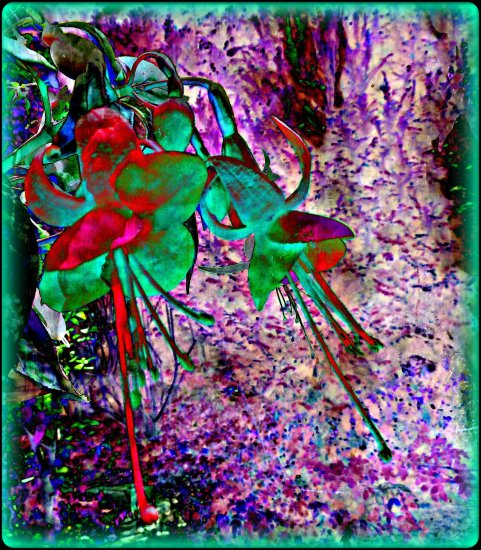 digitalartclub fuchsia flower