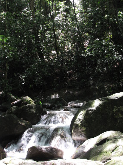 rapid mendanha nature forest brazil