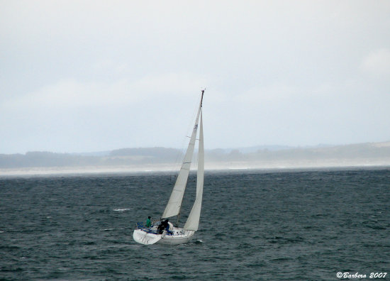 boats sailing yacht sea regatta chile concon