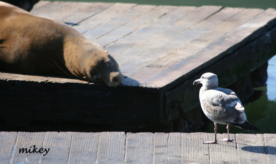 bird and sea lion