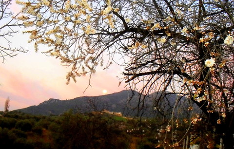 spain home almondblossom fullmoon
