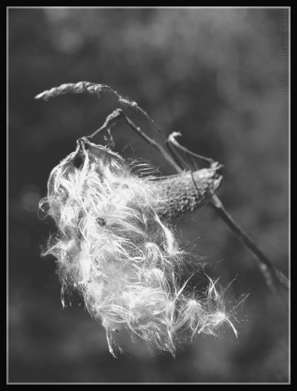 nature flowers closeup macro dof bw