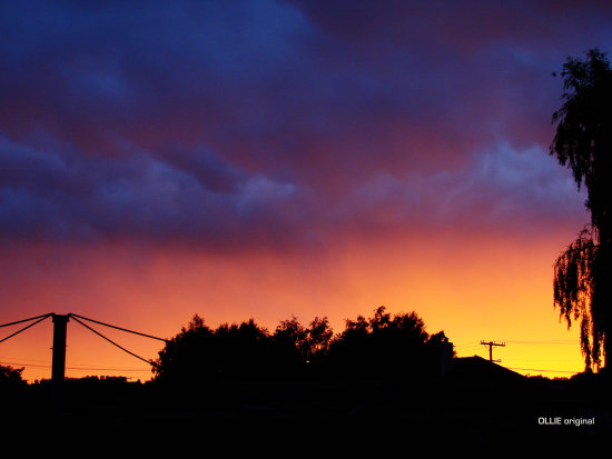 archives sunrise back yard mosgiel nz littleollie