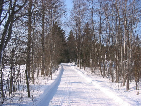 winter nature road