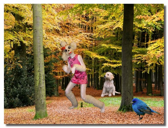 netherlands baarn ballet coppelia photoshop nethx amstx peopx chilx