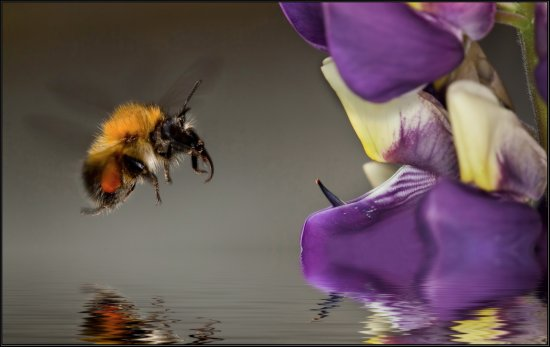 Bee flight nature