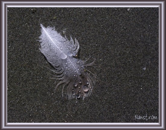 feather sand beach abstract