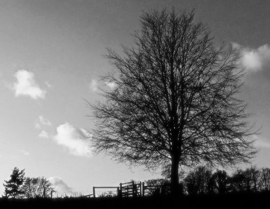 dusk tree infrared silhouette