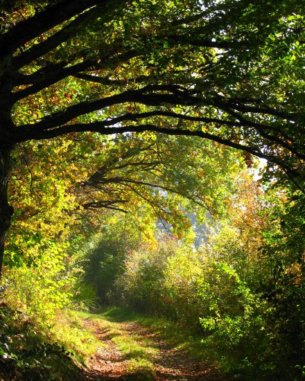 path autumn nature France october countryside landscape Trees tree