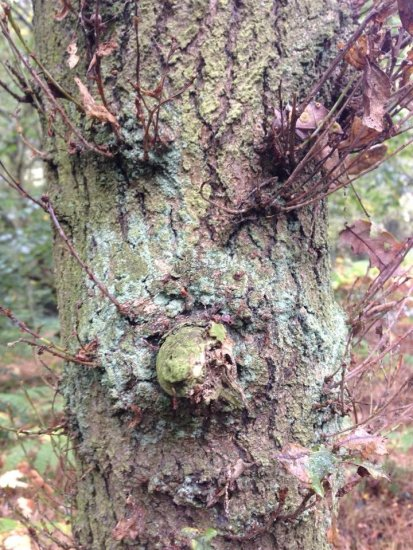 A tree with amazing eyebrows?????