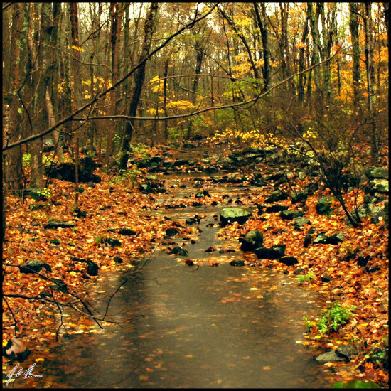 fall nature landscape leaves water river compautumn07