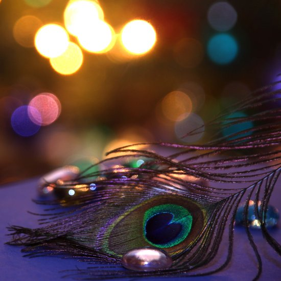 peacock feather macro light close up colour