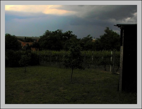 landscape tree bush grass vineyard roof garage sky clouds storm