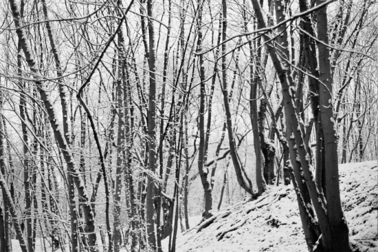 bw trees snow