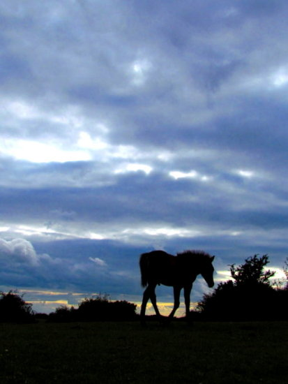 Pony New Forest Silhouette