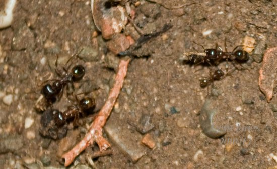ants insects nature