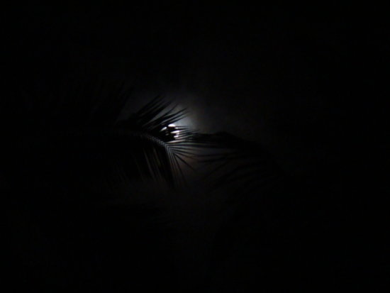 MooN the coconut trees