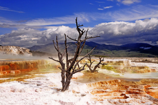 mammoth springs yellowstone