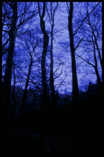 creepy blue forest indigo trees greece Pilio
