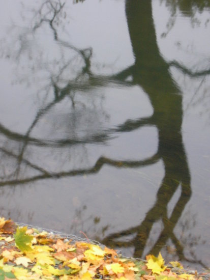 color of nature tree reflection