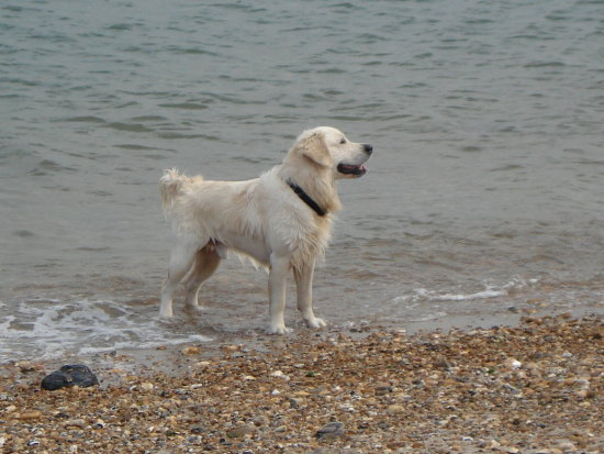 Watermike's dog !