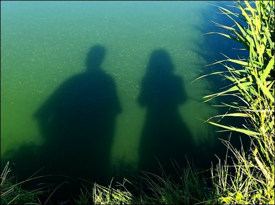 .... SOME OTHER WEED SPECIES REFLECTION IN BLOODY LAKE ....