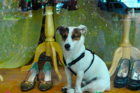 He is real this doggy in the window