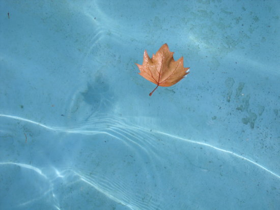 water leaf reflection ripple blue orange colour waves floating nature flo