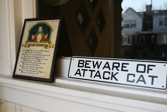 blessing cat attack mean dangerous really