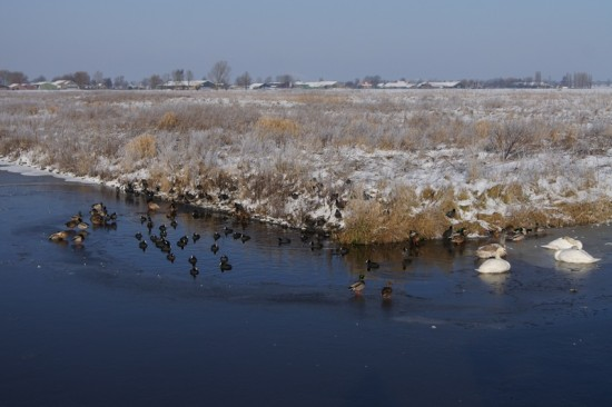 winter holland