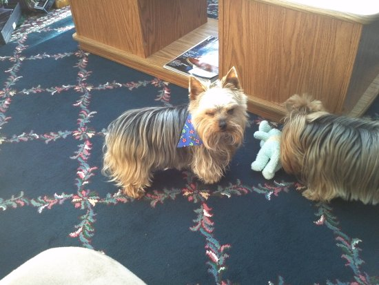 At Aunt Helen's house-One of her little dogs as two a girl & male-so cute-this is a male-1st phot...