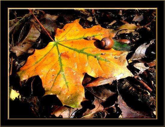 leaf autumn France nature