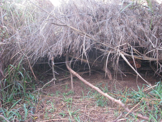 The thicket that the precious mother dog made a home to birth her puppies