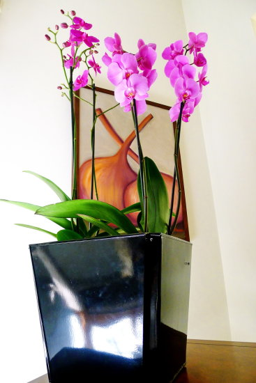 plant orchid pink painting
