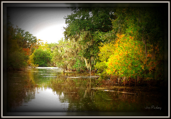 Bayou Swamp Louisiana Pankey Wildspirit Scenery reflectionthursday