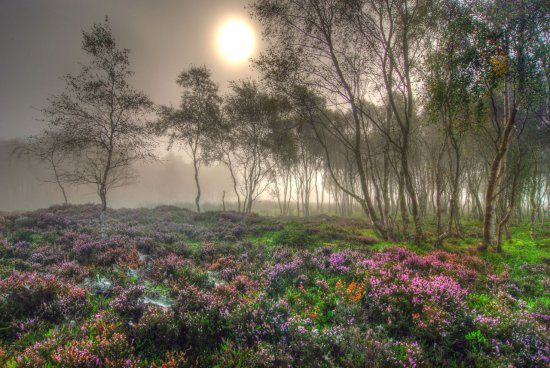 HDR Landscape Mist Heather