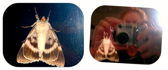thebigmoth collage scarymoth mossyrock washington