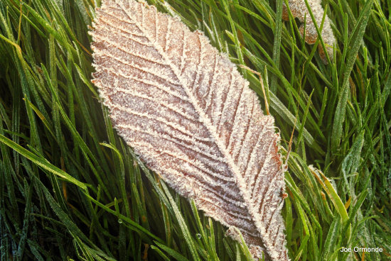 winter frost leaf