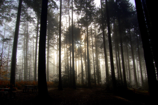 trees mist cold winter rosemoor
