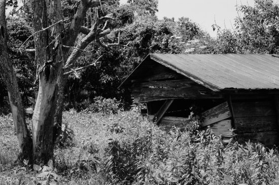 shed shelter trees bushes blackandwhite