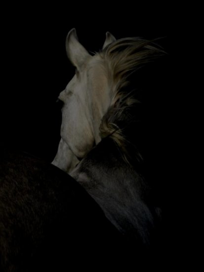 horse animal photography