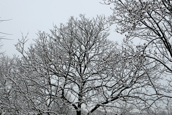 snow tree flock white