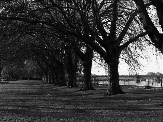 autumn park trees leaves bw