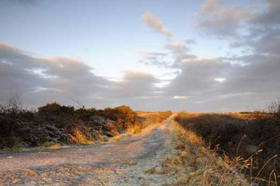 sunrise frost morning old bog road