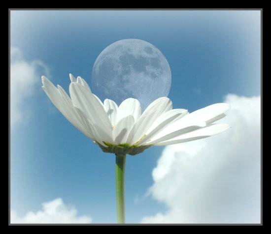 flower moon clouds