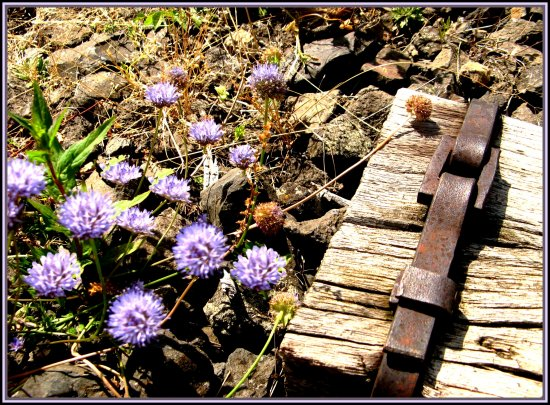 rusty railway nature flowers France iron wood