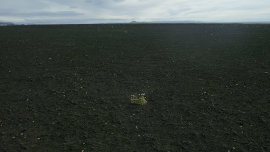 One single planet in the black sand , fighting for survival